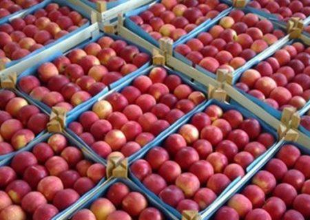 تولید بیش از ۳۰ هزار تن سیب زیر درختی در اهر
