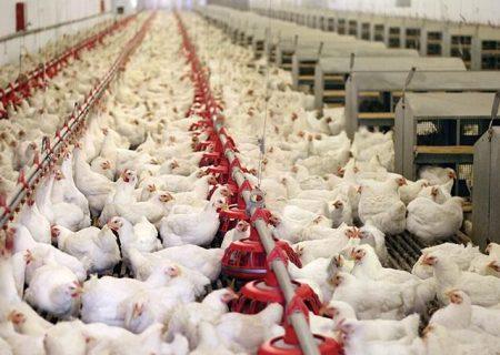 خیز مجدد قیمت مرغ در بازار/ نرخ هر کیلو مرغ به ۲۷ هزار تومان رسید