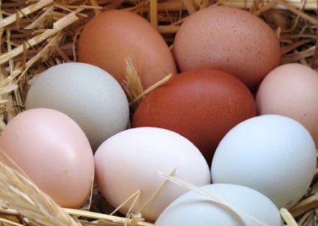 درج قیمت ۱۱۰۰تومانی روی هر تخممرغ الزامی شد