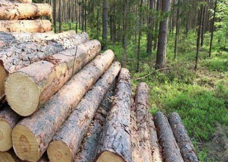 قطع غیرمجاز ۲۴ تن چوب درختان جنگلی در کلیبر