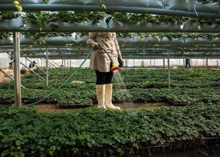 ۳۷۰ میلیون دلار سرمایه گذاری خارجی در بخش کشاورزی
