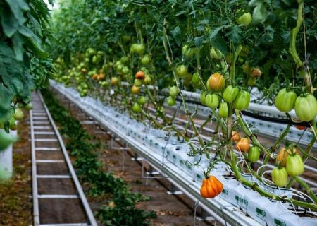 احداث گلخانه در داخل شهرکهای کشاورزی آذربایجان شرقی