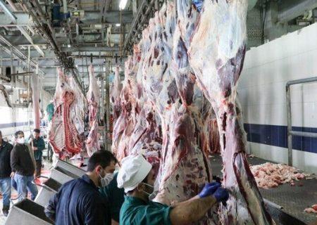 تولید نهادههای دامی از ضایعات شکمبههای گاوی و گوسفندی برای اولین بار در کشور