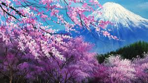 جشنواره شکوفه های گیلاس کاوازو ژاپن