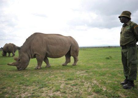 «جنگ پوچ و انتحاری بشر با طبیعت»: بیمها و امیدهای اقلیمی در گزارش سازمان ملل