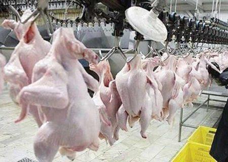 مشکلات ناهمخوانی تولید و توزیع مرغ در آذربایجانشرقی