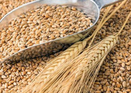 امتناع گرجستان از خرید گندم روسی