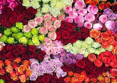 گرانی بیسابقه گل در نوروز ۱۴۰۰/ تولید ۷۰ درصد کاهش یافت