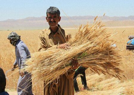 دهنکجی دولت به کشاورزان ایرانی؛ گندم شما را ۴ هزار تومان میخریم، گندم درجه ۳ خارجیها را ۹ هزار تومان!