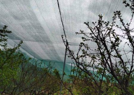 """اجرای طرح پایلوت """"سایهبان باغی"""" برای خشکسالی پیش رو در آذربایجان شرقی"""
