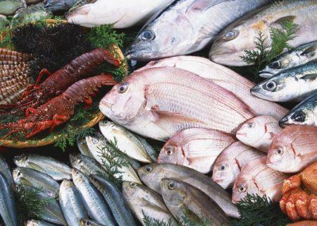 پیش بینی صید ۶۷۰۰ تن ماهی از منابع آبی آذربایجان غربی
