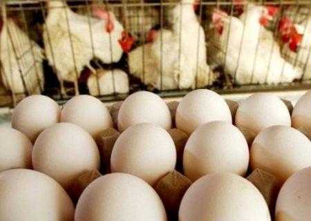 زیان سنگین ۷ هزار تومانی مرغداران در تولید هر کیلوگرم تخم مرغ / انتظار جهش قیمت تا کمتر از ۲ ماه دیگر