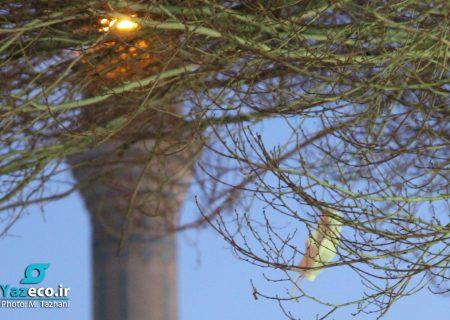 زباله، طلای آلوده است/ تولید روزانه ۱۰۰۰ تا ۱۵۰۰ تن زباله در تبریز