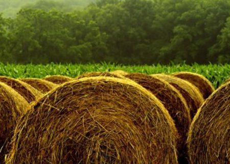تولید سالانه ۲۲ میلیون تن محصولات علوفه ای در کشور / کشت سورگون دانهای برای نخستین بار