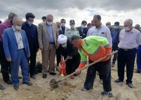 کشت ۳۶۰۰ نهال پسته در خسروشاهِ تبریز / پیگیری الگوی کشتِ جایگزین در حوضه دریاچه ارومیه 