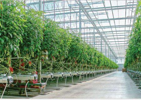 بهرهبرداری از ۱۹۶هکتار گلخانه در آذربایجانشرقی طی هشت سال اخیر