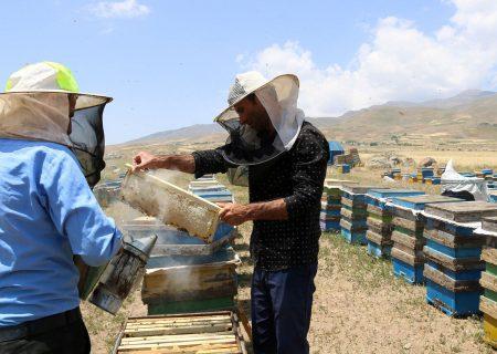 ۳۰ تا ۴۰ درصد جمعیت زنبور عسل استان اردبیل تلف شدند