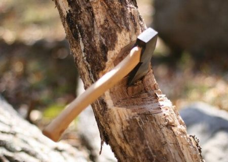 متهم قطع اشجار در ملکان به کاشت نهال محکوم شد