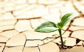 گسترش اراضی کشاورزی در استان، فاجعهی زیستمحیطی به دنبال دارد/میزان دام در استان ما سه برابر مراتع است