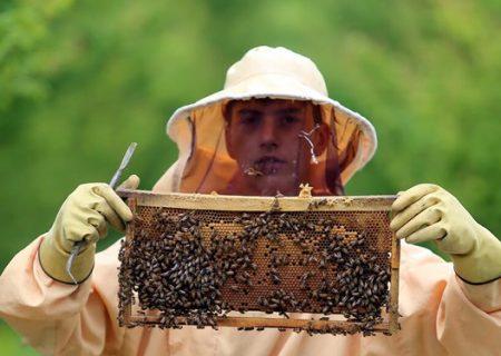 تولید ۸ درصد از عسل کشور در استان اردبیل
