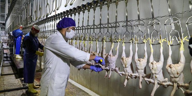 زنجیره صنعت مرغ از تامین خوراک تا تولید و کشتار باید یکپارچه شود