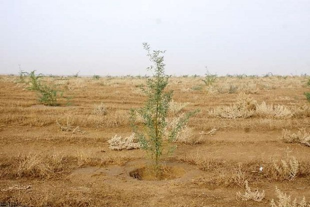 ۳۲ میلیون هکتار بیابان در کشور وجود دارد