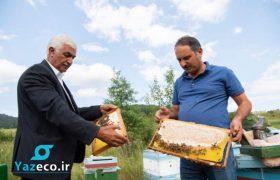 زنبورداران آذربایجان پس از استقرار در اراضی کلبجر این بار در لاچین نیز مستقر شدند