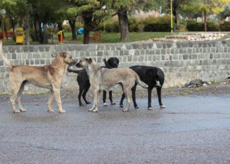 جولان سگهای ولگرد در خیابانهای تبریز/شهرداری متولی اصلی ساماندهی