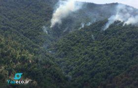 جنگل های نوار جنوبی جمهوری آذربایجان دچار حریق شده است