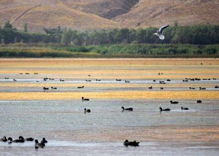 خشکسالی و فرسودگی کانال از عوامل مهم خشکی تالاب قوریگل