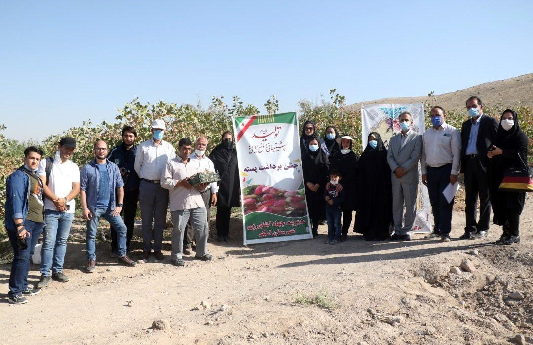 اختصاص ۱۳۶۴هکتار از باغات آذربایجان شرقی برای کشت پسته
