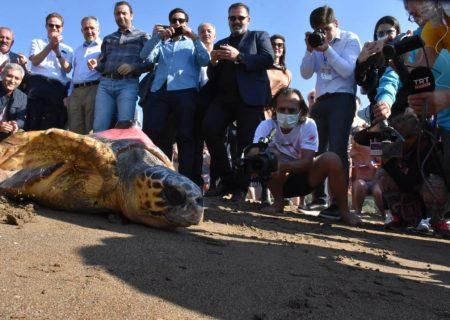 بحران آب و هوا الگوهای سفر لاک پشت های دریایی از ترکیه را تغییر می دهد