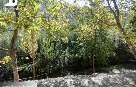 گزارش تصویری یازاکو از روستای قرمزی گل کندی در شهرستان آذرشهر