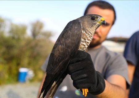 رودخانه ارس؛ بهشت پرندگان در شرق ترکیه